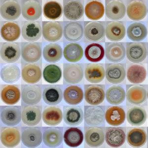 cultivo de hongos microbiologia