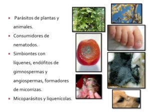 tipos de hongos y su clasificacion taxonomica