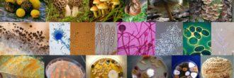Hongos filamentosos
