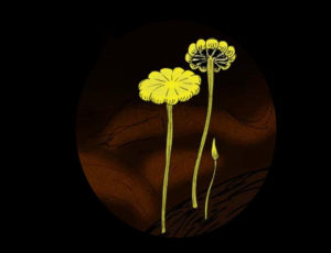 hongos antiguos extintos