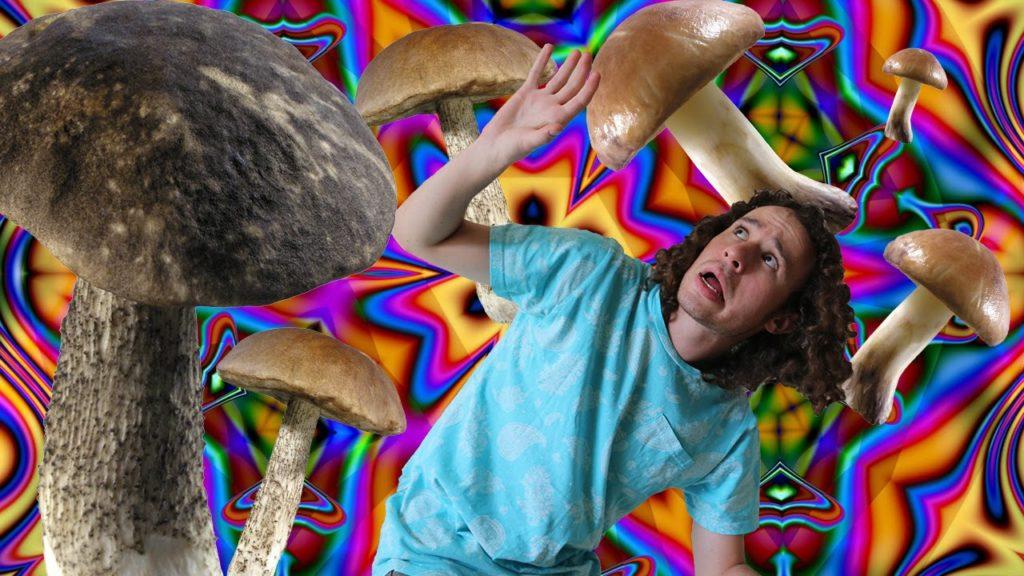 hongos alucinogenos efectos