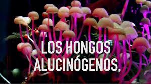 adiccion a hongos alucinogenos