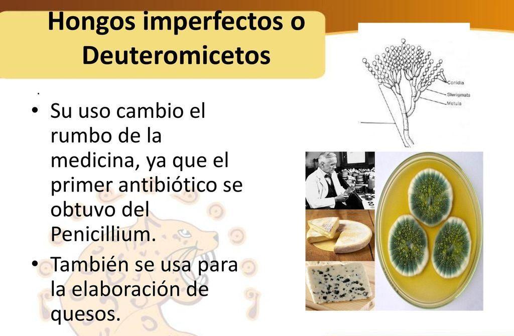 hongos imperfectos y sus caracteristicas