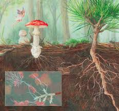 multiplicacion de hongos micorrizicos