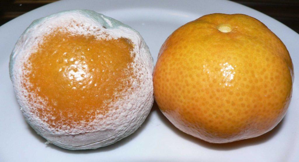 hongos en los alimentos wikipedia