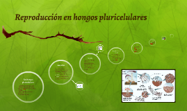 hongos pluricelulares tipos