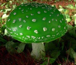 tipos de hongos venenosos