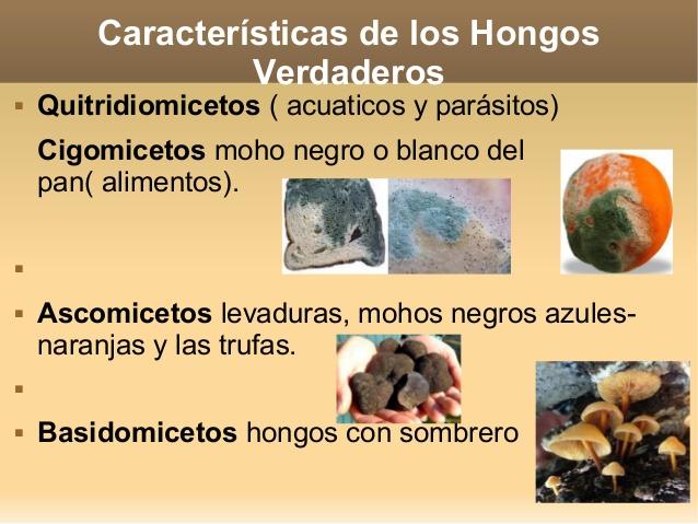 hongos verdaderos y falsos caracteristicas