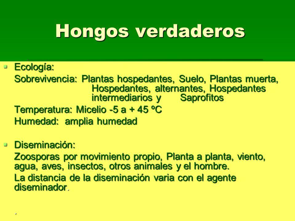 hongos verdaderos clasificacion