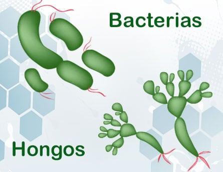 hongos y bacterias que benefician al ser humano