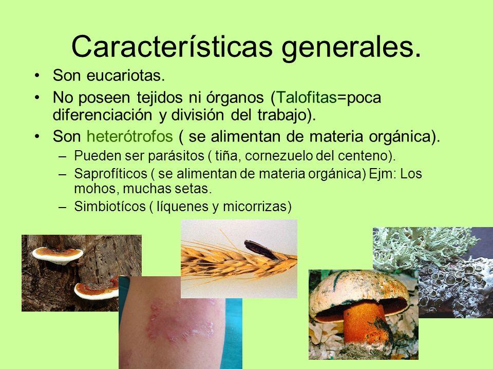 caracteristicas de los hongos ciencias naturales
