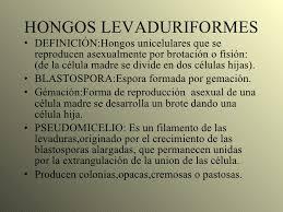 abundantes hongos levaduriformes