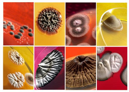microbiologia tipos de hongos