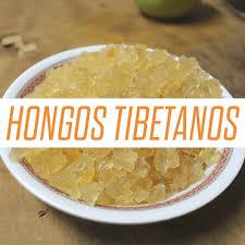 hongos tibetanos para que sirve