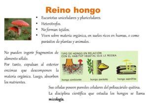 tipos de hongos y clasificacion