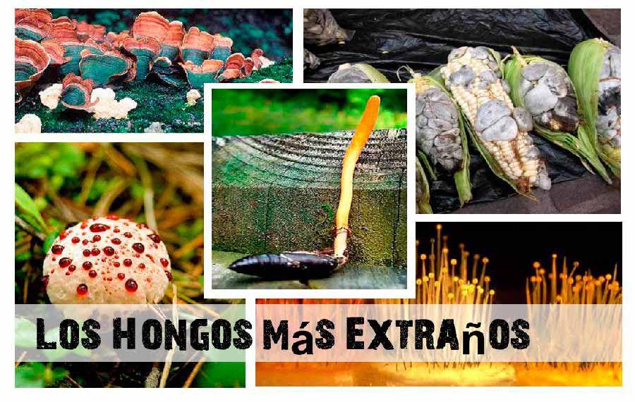 tipos de hongos que existen y su clasificacion