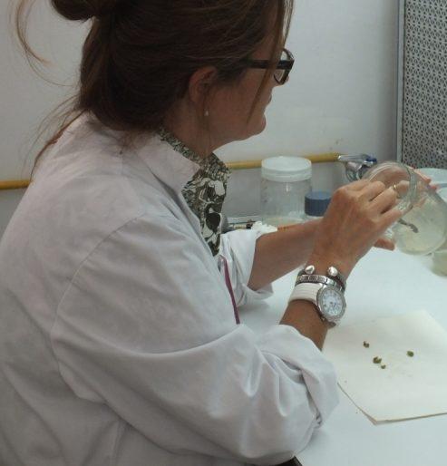 aislamientos de hongos fitopatogenos