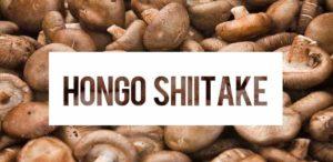 hongo shiitake para que sirve