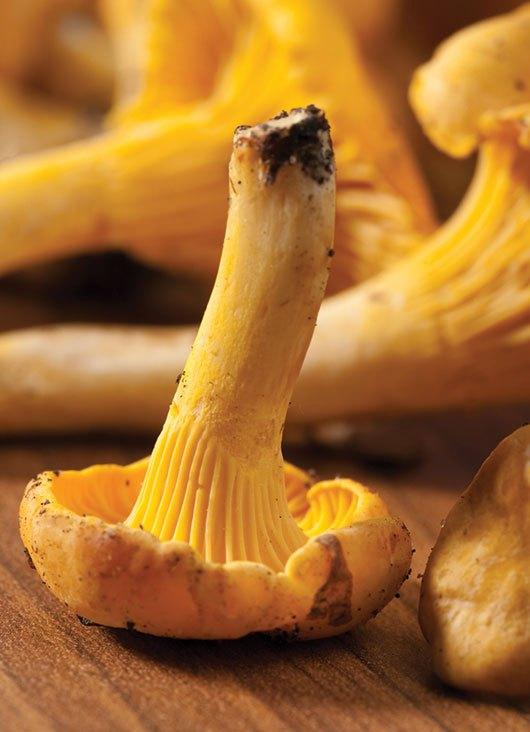 hongos amarillos en la tierra