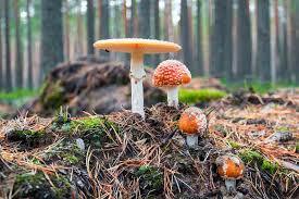 los hongos son seres vivos