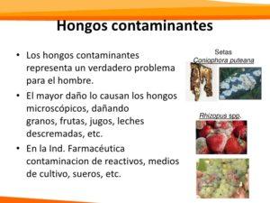 hongos contaminantes clasificacion