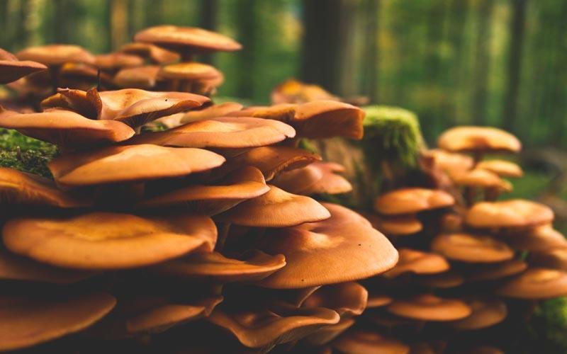 hongos descomponedores de materia organica