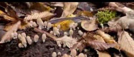 hongos descomponedores de materia organica ejemplos