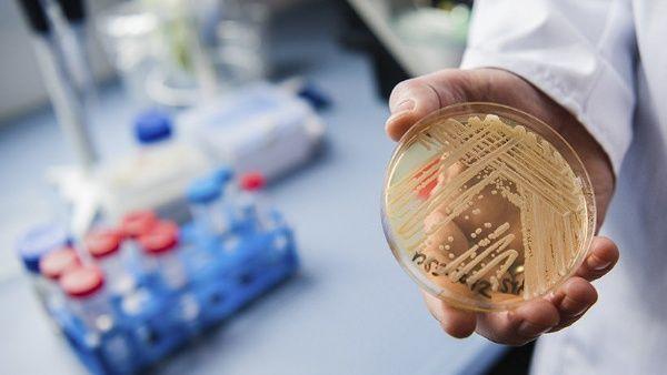 hongos patógenos estructura