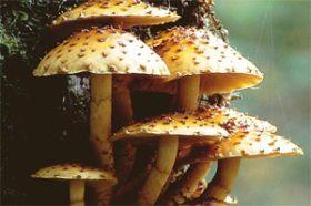 hongos zigomicetos y sus partes